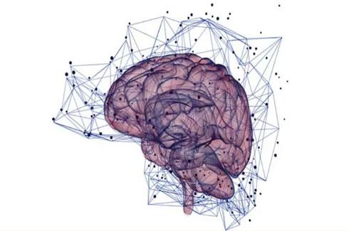 collegamenti neurali